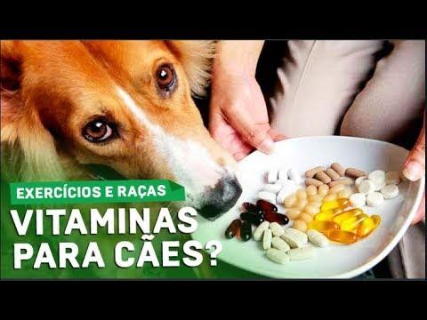 Vitamina para Cão Ficar Forte e Musculoso Atividades Físicas Regulares Ajudam