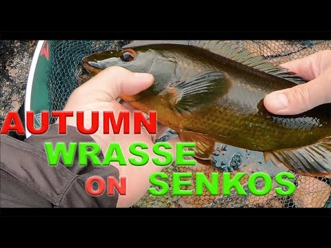 Lure Fishing For Wrasse With Senkos - HRF