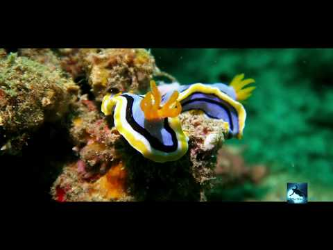 Life On Coral Reef