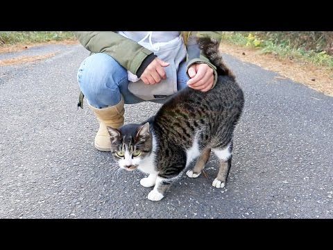 The Cat That Won't Stop Meowing, on Japan's Cat Island