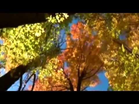 Звездная Пыль (2007) | Трейлер #1 | Киноклипы Хранилищеиз YouTube · Длительность: 2 мин46 с