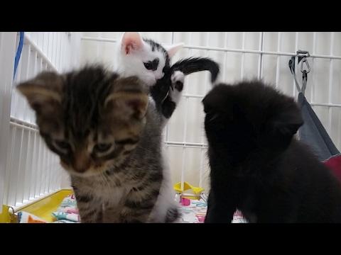 Kitten Close Up 2017-06-05