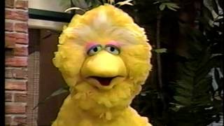 Sesame Street - Big Bird & The Cuckoos