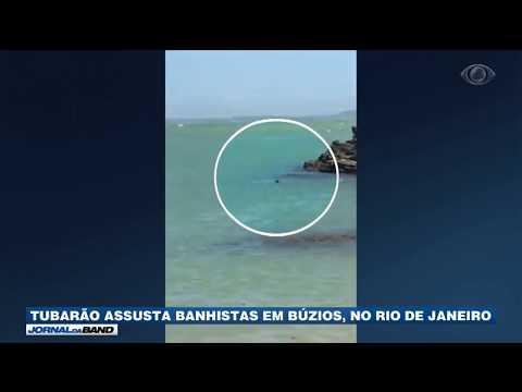RJ: Tubarão Assusta Banhistas Em Búzios