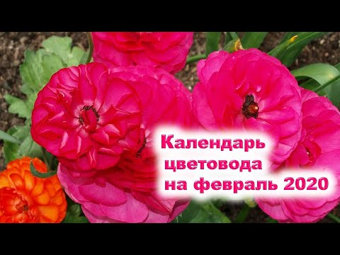 Календарь цветовода на февраль 2020 года. Семена каких цветов можно посеять на рассаду в феврале?