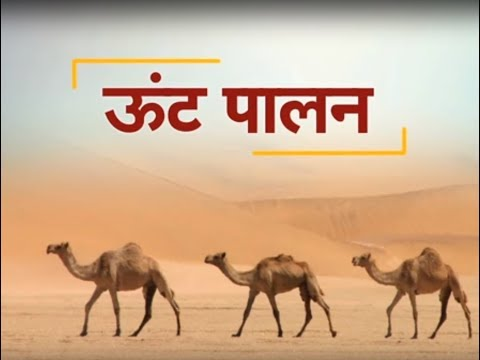 Krishi Darshan - Camel Farming