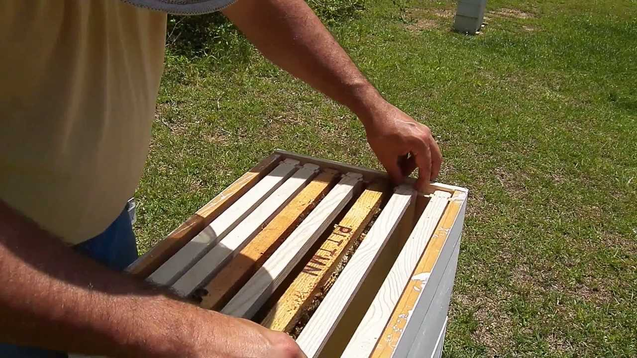May 23, 2013. 8 frame beehive inspection. - YouTube