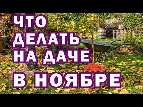 Вопрос: Какие работы необходимо сделать на садовом участке в ноябре?
