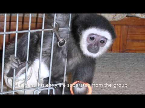 Meet Our Primates: Abbie & Yoda