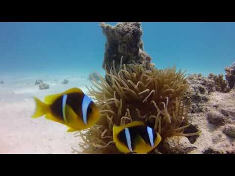 The Sea Anemone!