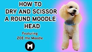 Cómo secar y cortar con tijeras una cabeza redonda de Moodle