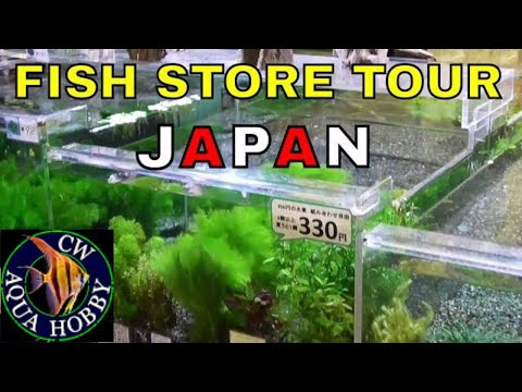 Japan Cainz Home Center Fish Store Tour 2 - Fish Store Aquarium Shop in Asia