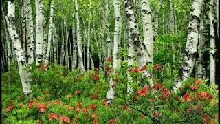Мой край родной (стихи о природе, зима, весна, лето, осень, русские, красивые, короткие, добрые)