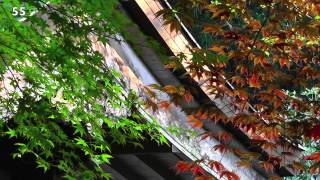 Nature scenes in Japan - mid season spring flowering plants and ferns