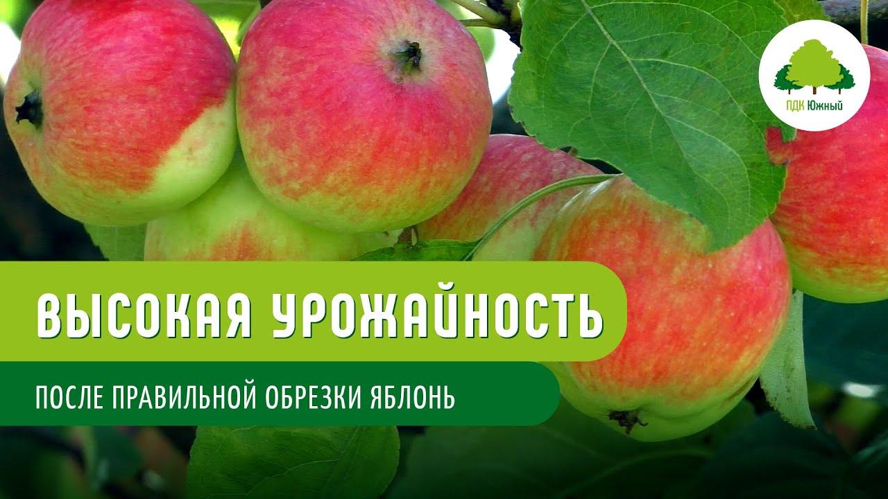 Обрезка яблони – залог высокой урожайности