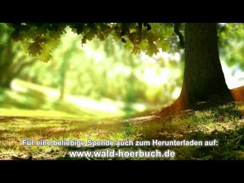 Wenn der Wald spricht - 10. Kapitel - Gut & Böse