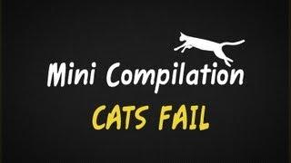 Mini Compilation: cats fail || VPL
