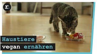 Hunde und Katzen vegan ernähren - muss das sein?