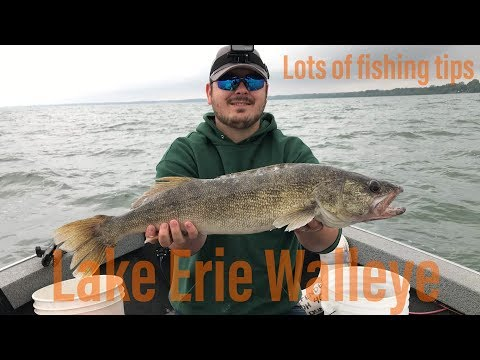 LAKE ERIE WALLEYE (lots Of Fishing Tips)