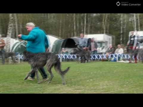 JAS Deerhound 2017