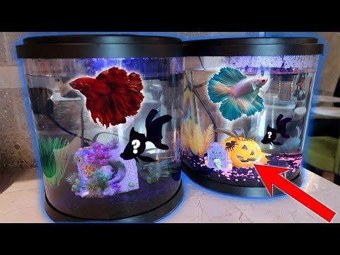ALL My *RARE* BETTA Fish Get TANK MATES!! (2.5 gallon BETTA tank)