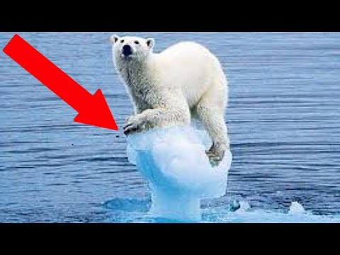 8 Negative Effects of Climate Change