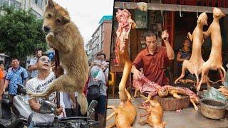 في الصين يأكلون الكلاب .. أخطر 6 أطعمة في العالم يأكلها الناس في الصين , لن تصدق ما ستراه