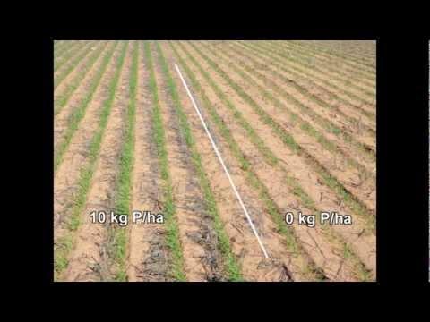 Phosphorus replacement in the upper Eyre Peninsula