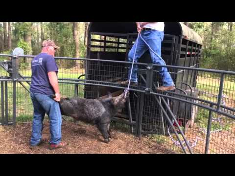 BAD Hogs are Hard to Move