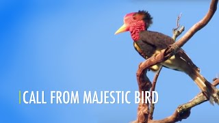 Call From Majestic Bird