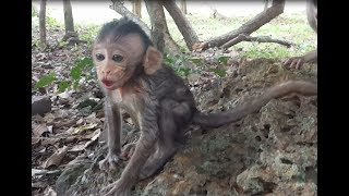 Bela cry welcome to big monkey, This video very lovely and funny one
