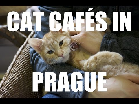 Cat Cafés in Prague