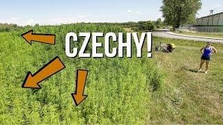Baixar W kraju kofoli i marihuany. Najlepsze miejsca w Czechach blisko | VLOG - Kołem Się Toczy