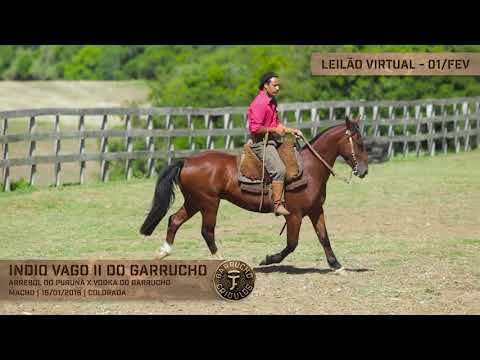 Lote 28 - Índio Vago II do Garrucho