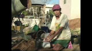 Victoria in the Garden - How to Grow a Moringa Tree