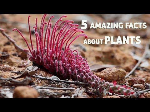 5 Amazing Facts About Plants Youtube