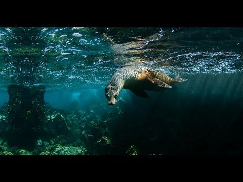 Go Galapagos Ecuador - HD