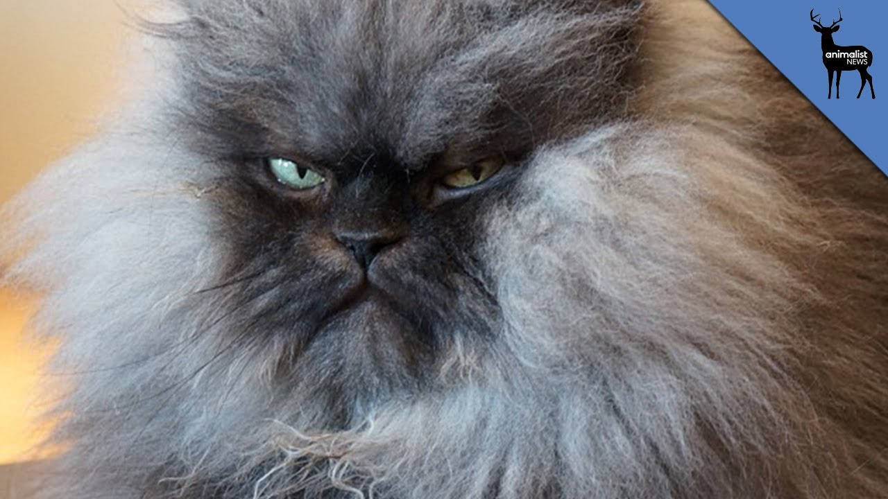 maxresdefault get well soon, colonel meow! youtube