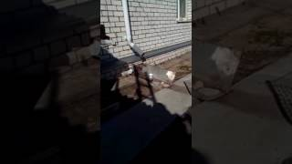 Мой рассказ про собаку