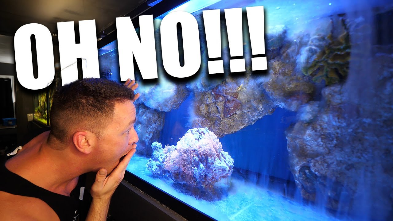 My saltwater aquarium problems and how I fixed them - download from YouTube for free