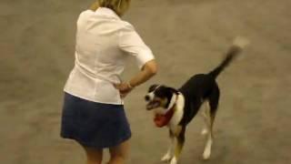 Dog Show Houston, Dancing