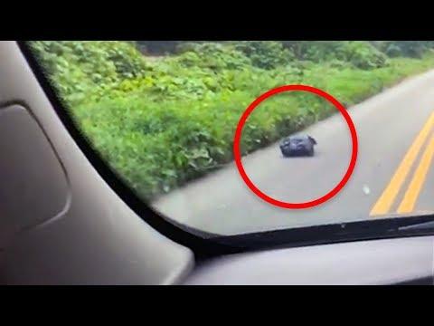 Woman Spots Trash Bag On Side Of Road, Then Her Heart Drops When She Looks Inside