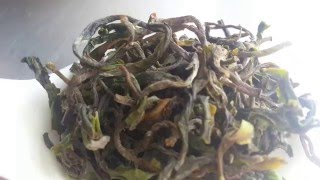 Giddapahar Tea Estate 2016 First Flush Darjeeling