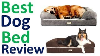 Best Dog Bed Reviews 2019 ।