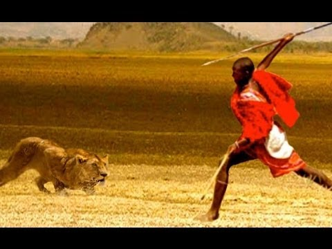 National Geographic Documentary - Lions vs Maasai Warriors - Wildlife Animal