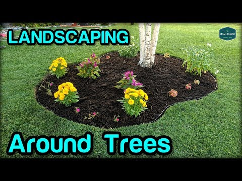 Landscaping / Edging / Mulching Around Trees