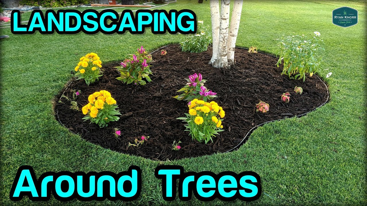 Landscaping Edging Mulching Around Trees Youtube