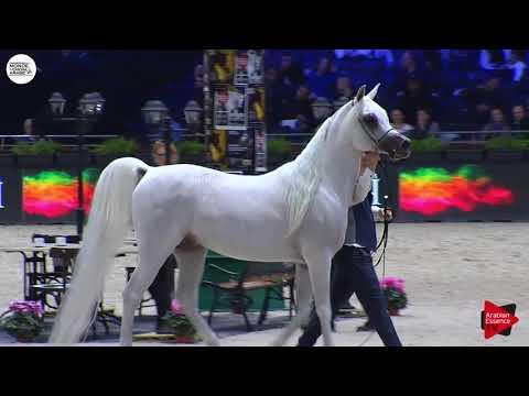 N.148 AL AYAL AA - Paris 2018 - Senior Stallions (Class CM 6B)