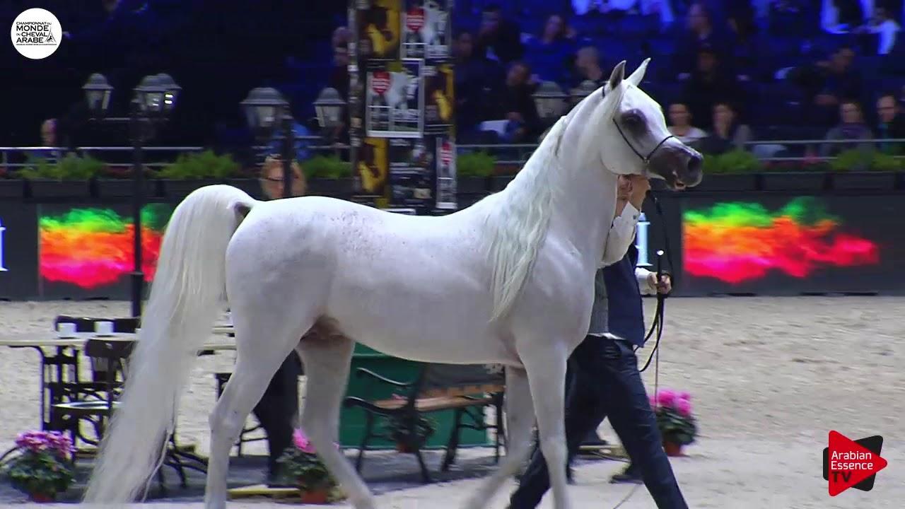 Download N.148 AL AYAL AA - Paris 2018 - Senior Stallions (Class CM 6B)
