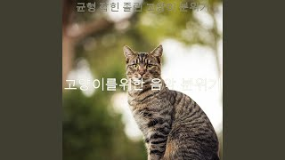 멋진 고양이 훈련 환경